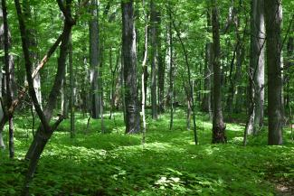 Mature Forest and ground cover